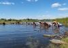 2020年8月5~12日、ウクライナ支部で夏のキャンプが開催されました。